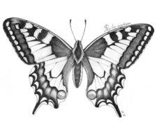 farfalla1_web