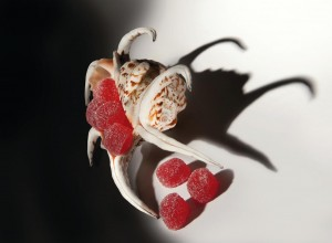 gelatinefragola